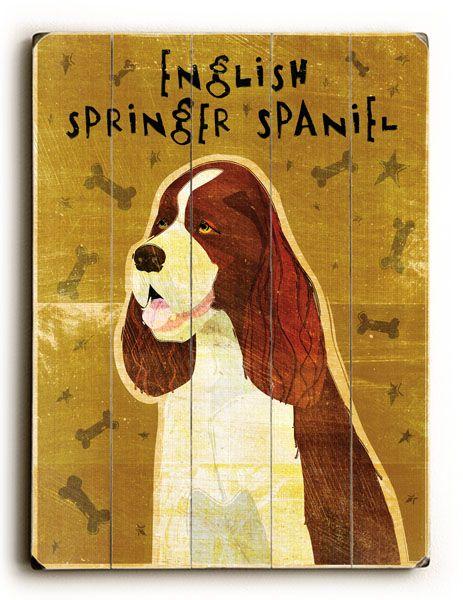 Springer Spaniel Springer Dog Spaniel Puppies English Springer Spaniel