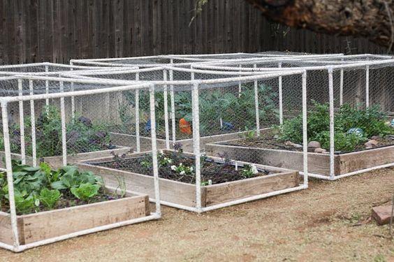 Rabbit proof garden vegetables garden ftempo for Garden grove dog and cat hospital