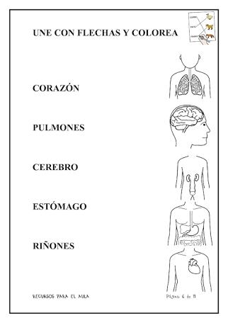 Resultat d\'imatges de partes del cuerpo para niños 4 años | ciencias ...