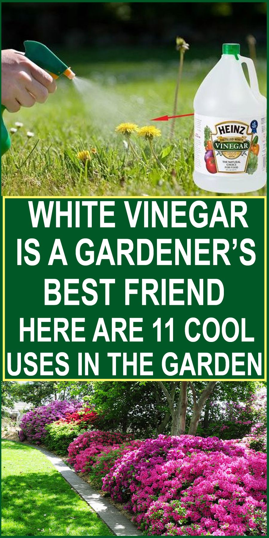People Use Organic Food To Digest Organic Products For Beauty And Makeup And Apply Organic Methods For Farming Vi Garden Pests Healthy Garden Gardening Tips