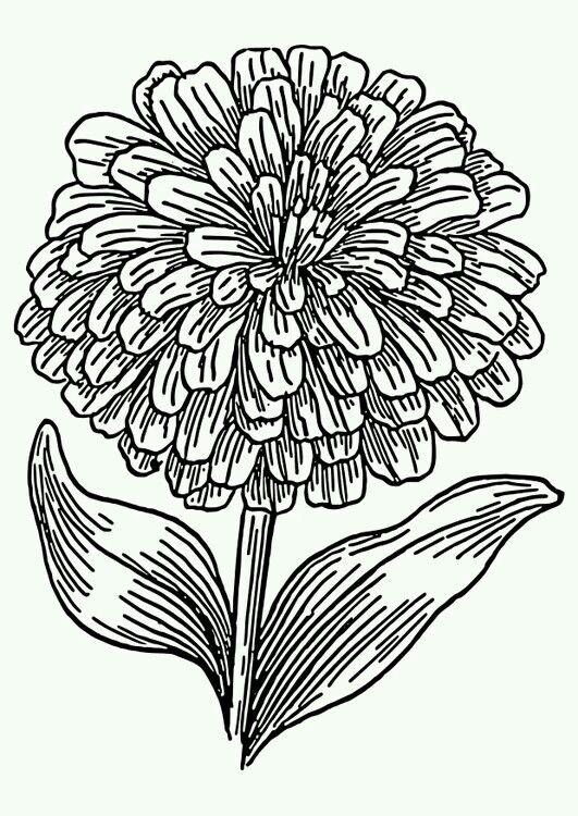 Arterapia Dibujo Dia De Muertos Dibujos De Flores Flor Cempasuchil