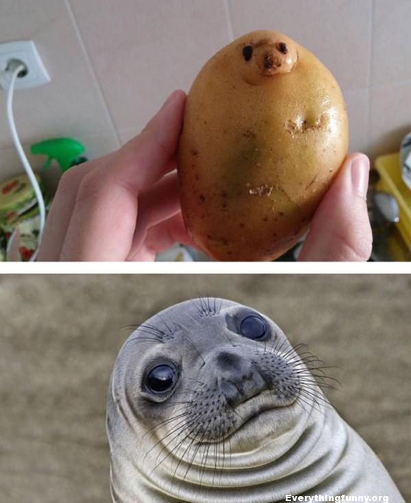For Seal Meme