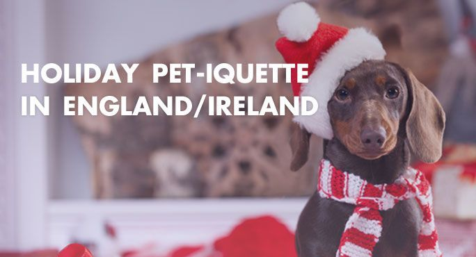 Holiday Pet Iquette In England Ireland Pet Holiday England Ireland Pets