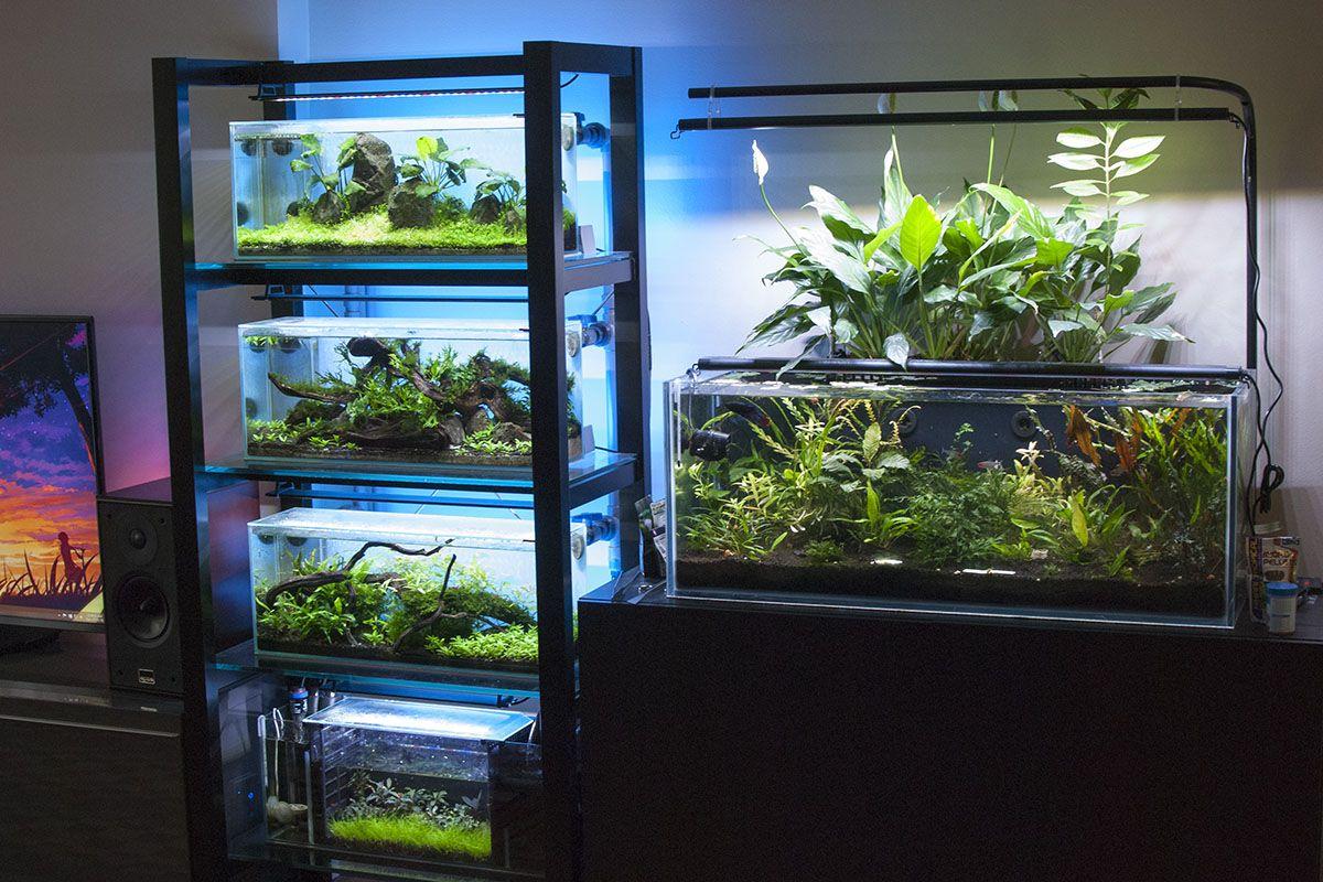 Bookshelf Of Aquariums