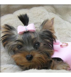 Diy Dog Bows Things That I Love Pinterest Dogs Puppies And