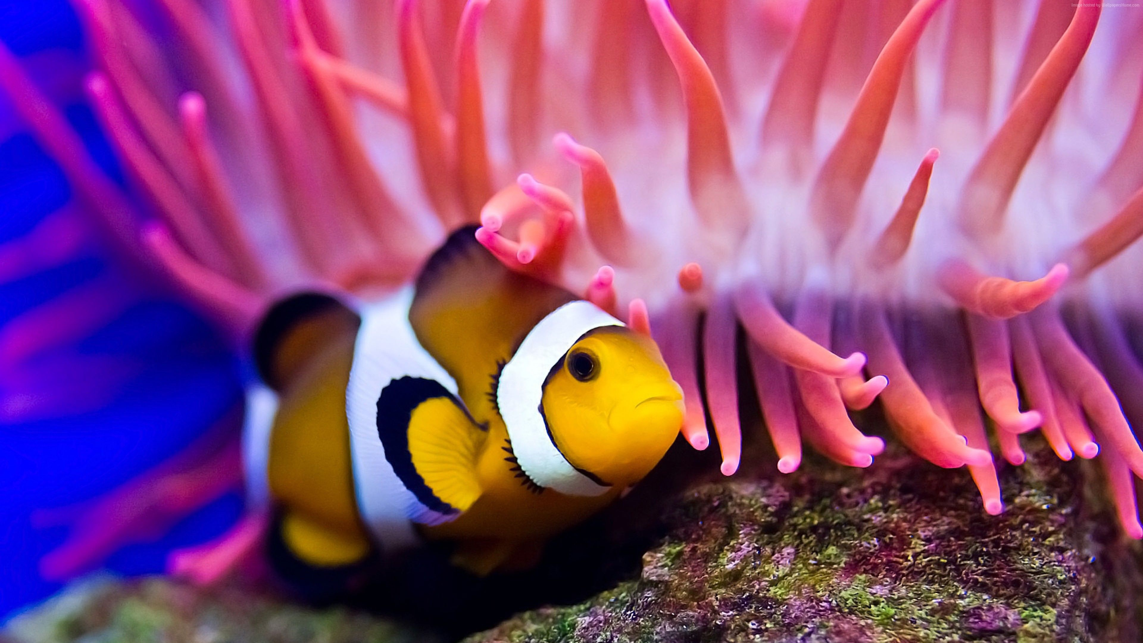 clownfish diving red sea coral worlds best diving sites 4k 4k