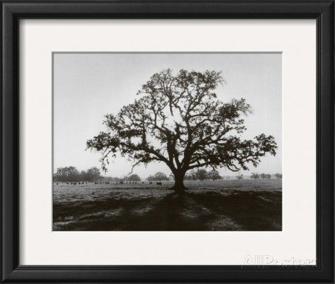 Oak Tree Sunrise Prints By Ansel Adams At Allposters Com Sunrise Art Photo Tree Framed Art Prints