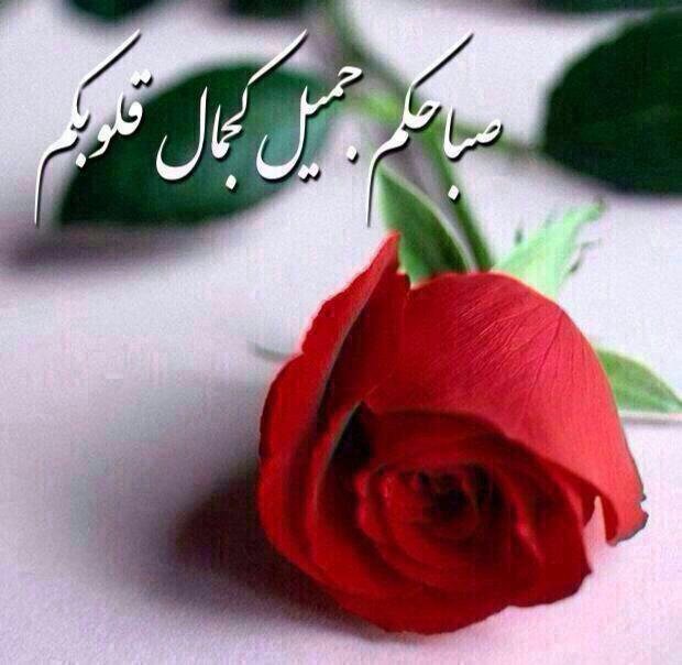 صباحكم جميل Good Morning Quotes Sweet Words Beautiful Morning