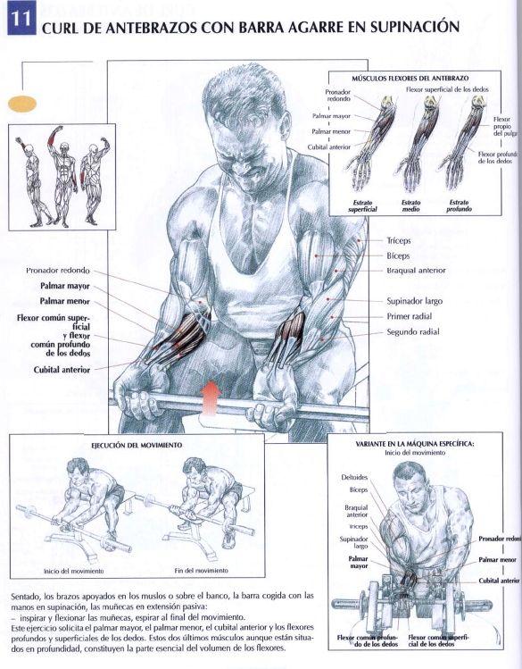 Cómo recibí comenzado con dolor detras de la rodilla