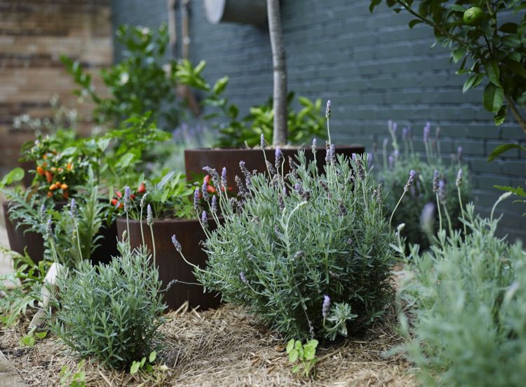 vorgartengestaltung ideen tipps pflege, 22 vorgartengestaltung ideen und tipps – richtig begrünen und, Design ideen