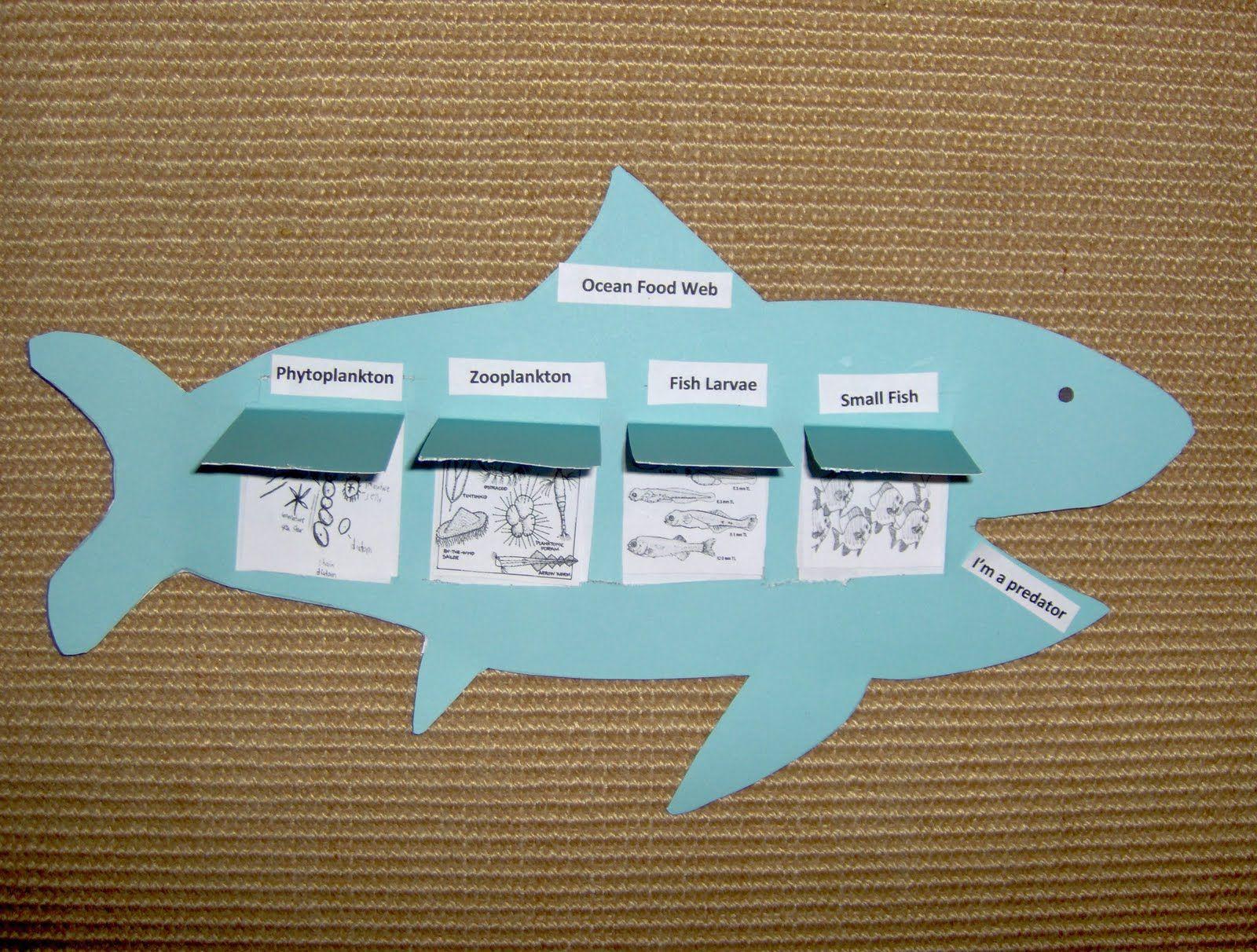 Bookish Ways In Math And Science Unit Resource Portfolio