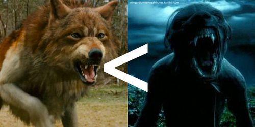 Jacob Black Werewolf Or Remus Lupin Werewolf Nicole Remus Lupin Werewolf Remus Remus Lupin
