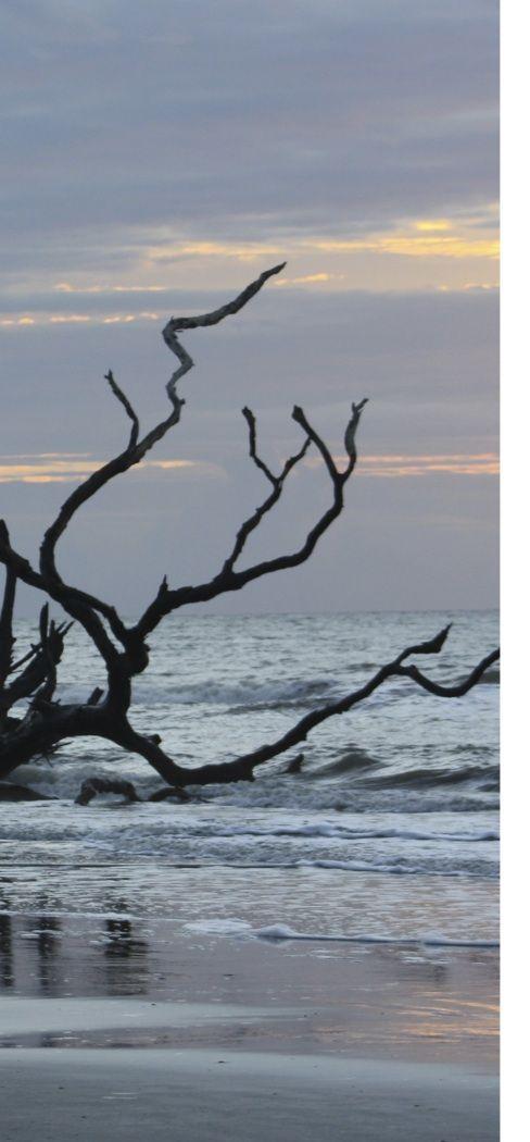 Bull's Island sunrise