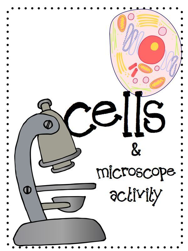 Cells microscope activity unit tpt science lessons pinterest cells animal plant labeling activity venn diagram about cells label the microscope and onion cheek cell microscope activity ccuart Image collections