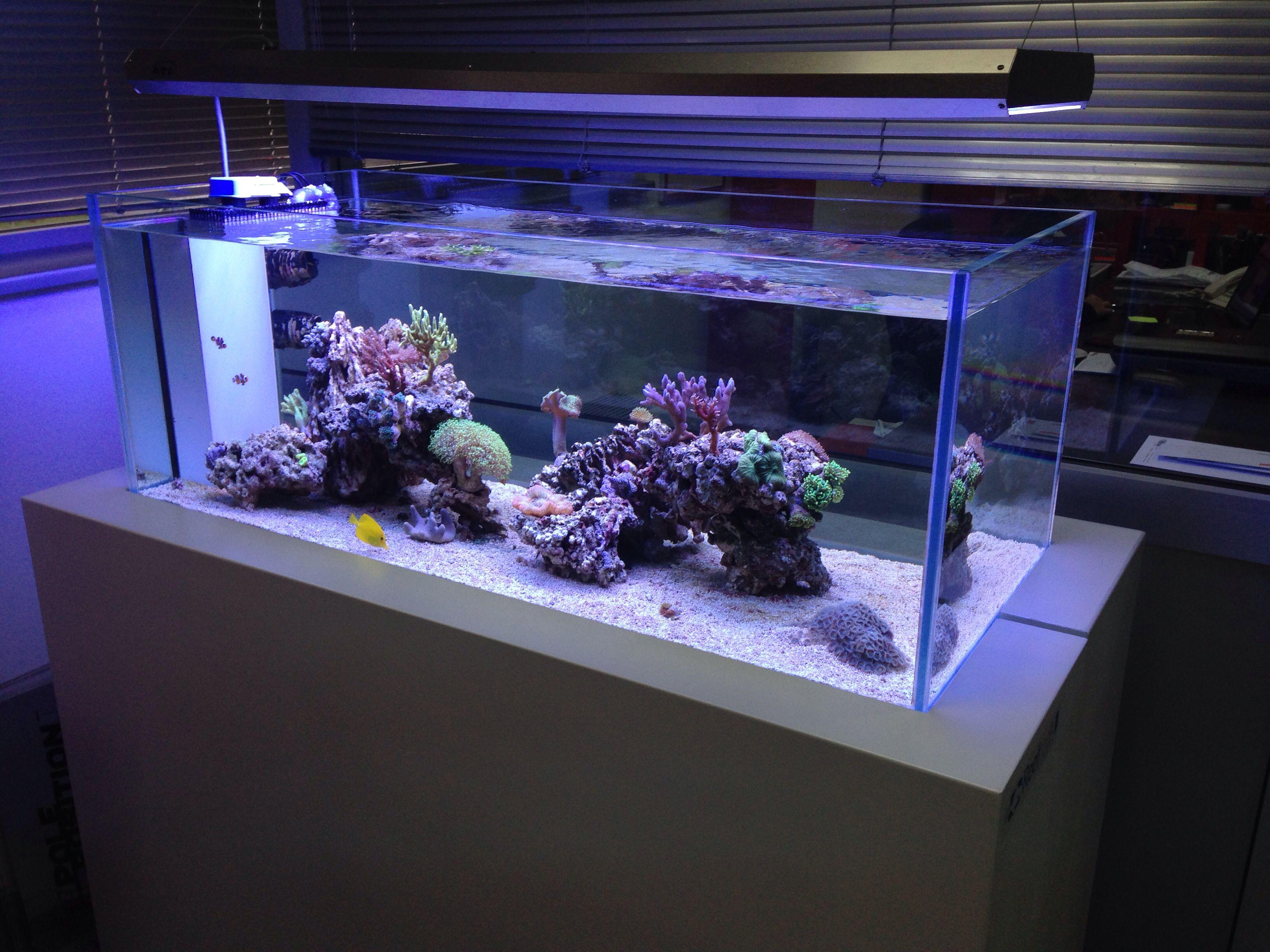IMG 3290 zpsjvgtqb77 Reef Aquarium Pinterest