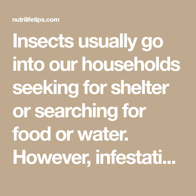 Insects usually go into our households seeking for shelter or