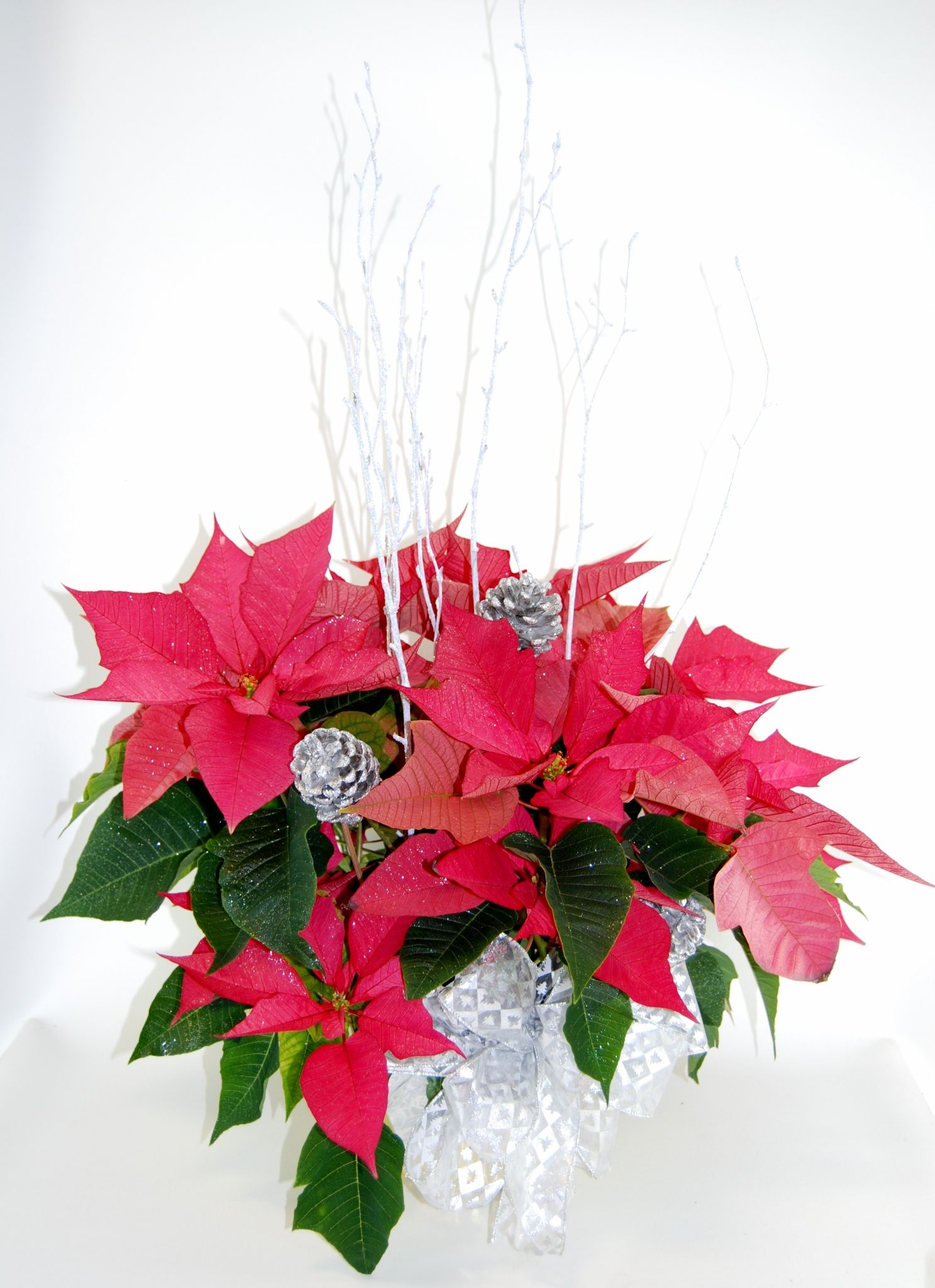 Frosting On The Poinsettia Flowers Online