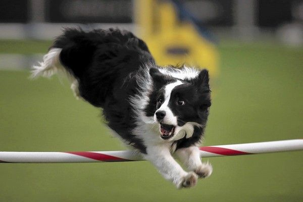 New Westminster Contest Invites All Westminster Kennel Club Dog