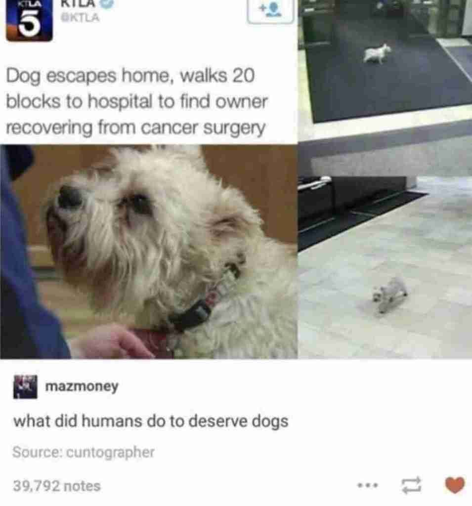 Here Are 25 Best Tumblr Posts Of The Week Funny Dog Memes