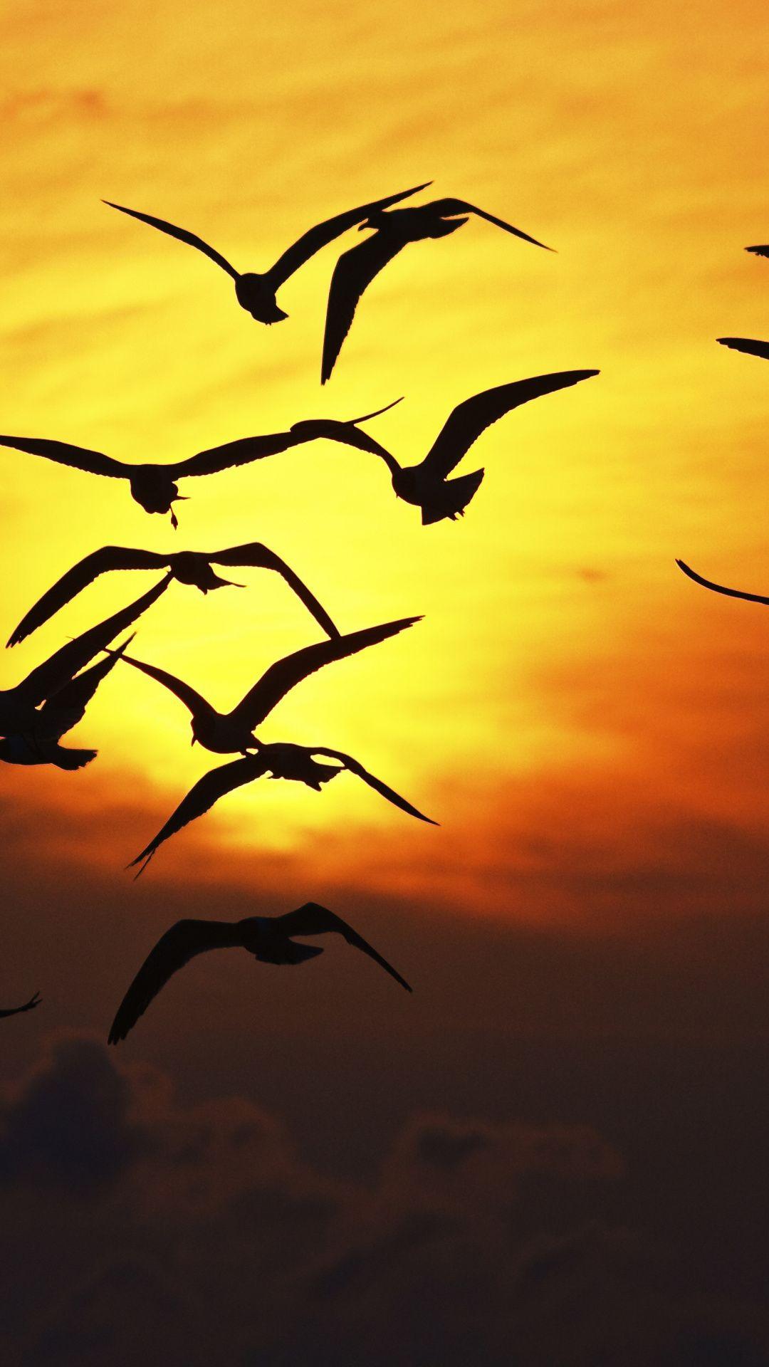 1080x1920 Birds Sunset Sky Silhouette Wallpaper Yellow Sky Sunset Silhouette Moon Photography