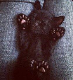 Pin By Barbara Leighty On Kittens Sleeping Kitten Kittens