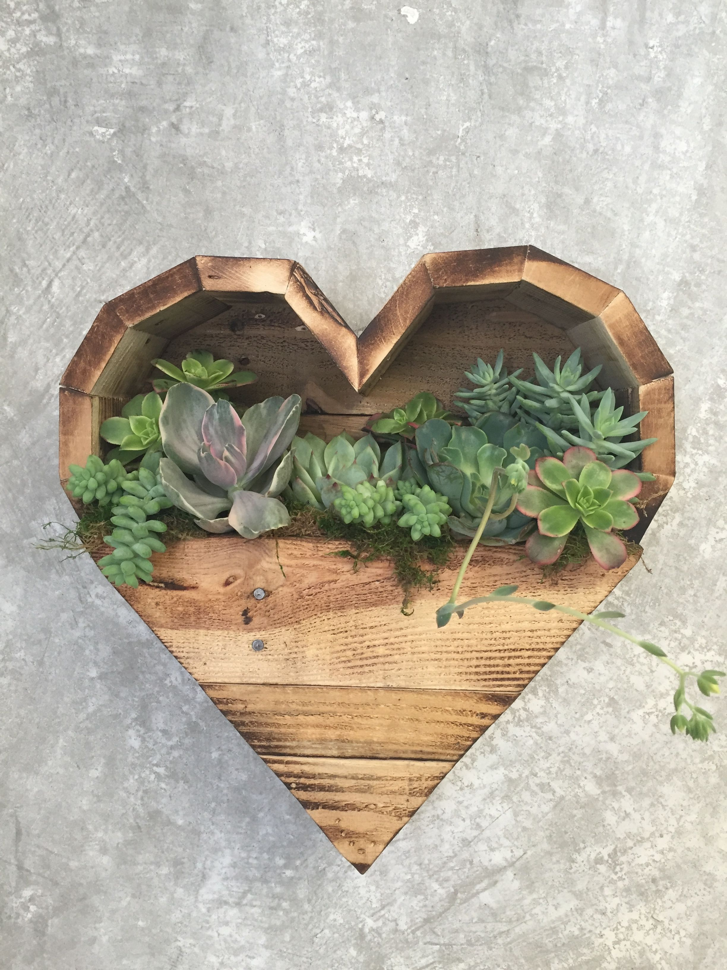 Heart Shaped Planter Box With Succulents Hunt Collective $95