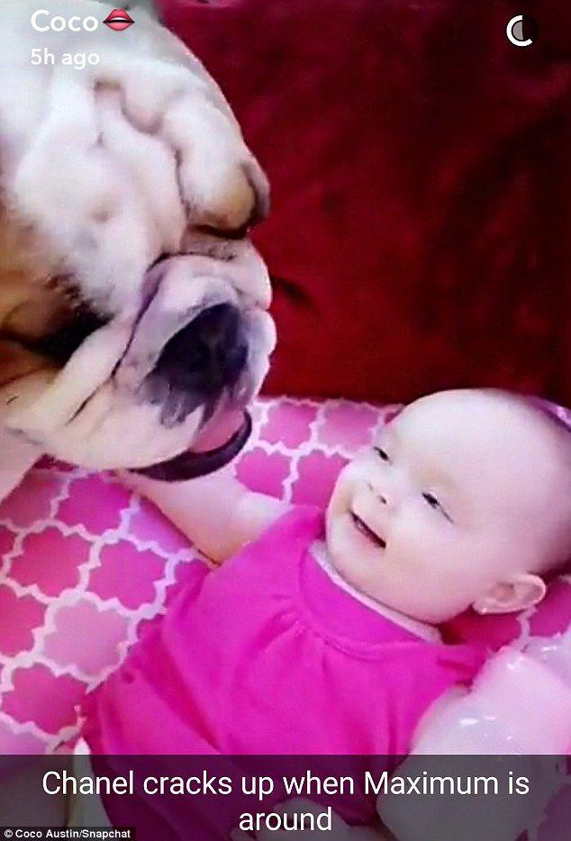 Baby Chanel Cracks Up At Coco Austin S Impression Of Pet Bulldog