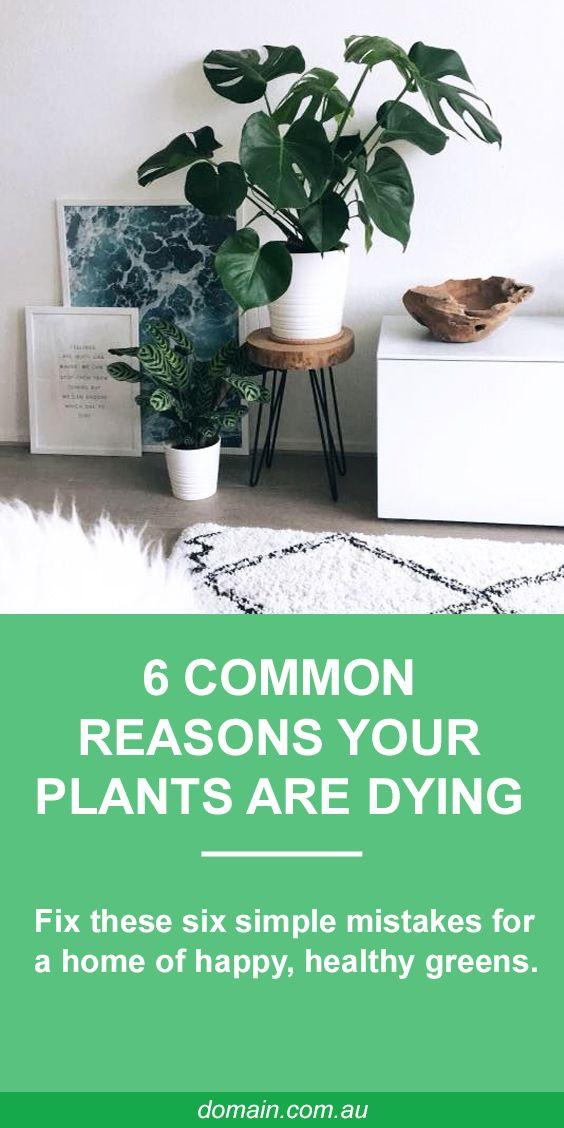 15 indoor plants Tattoo ideas