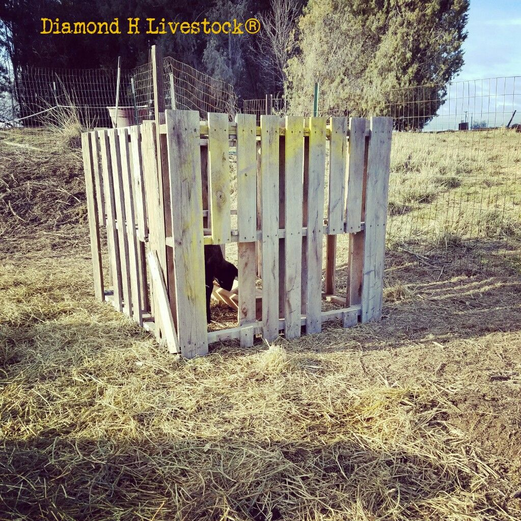 large feeder wexford esmonde for equipment sheep lamb srcset feeders btg creep