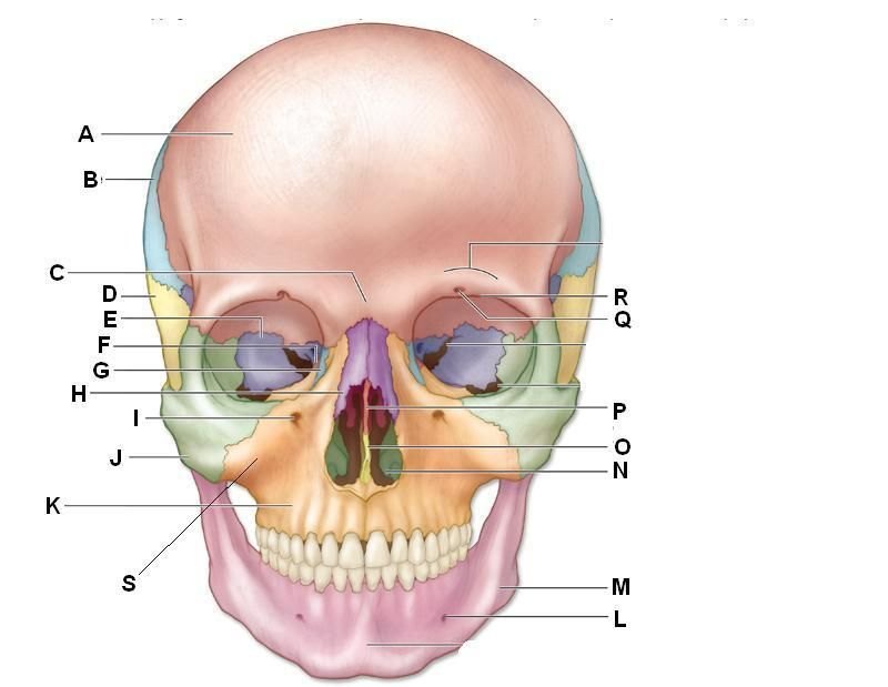 fill in blank skull submited images pic 2 fly perfect for csd  : blank skull diagram - findchart.co