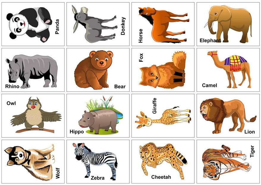 image regarding Animal Cards Printable called Wild+Animal+Flash+Playing cards+Printable Preschool Animal