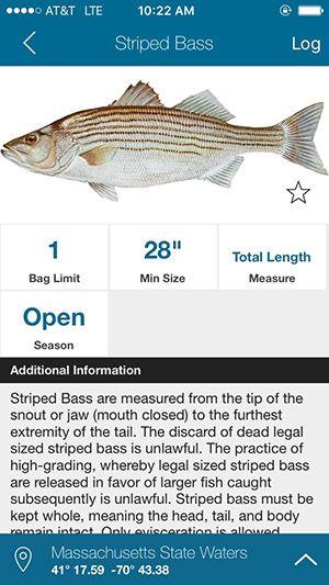 striped_bass_fish rules app Fish, Saltwater fishing
