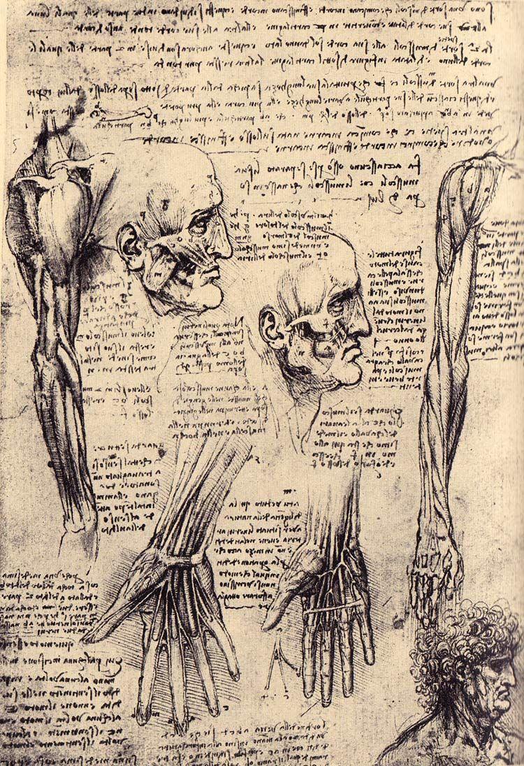Three heads and muscular body drawings, by Leonardo da Vinci ...