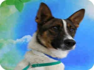 Crash Is An American Akita Shepherd Mix Available For Adoption In Las Vegas He Will Be At Petco Blue Diamond Rd Sat Dog Adoption Shepherd Mix Dog Pet Adoption