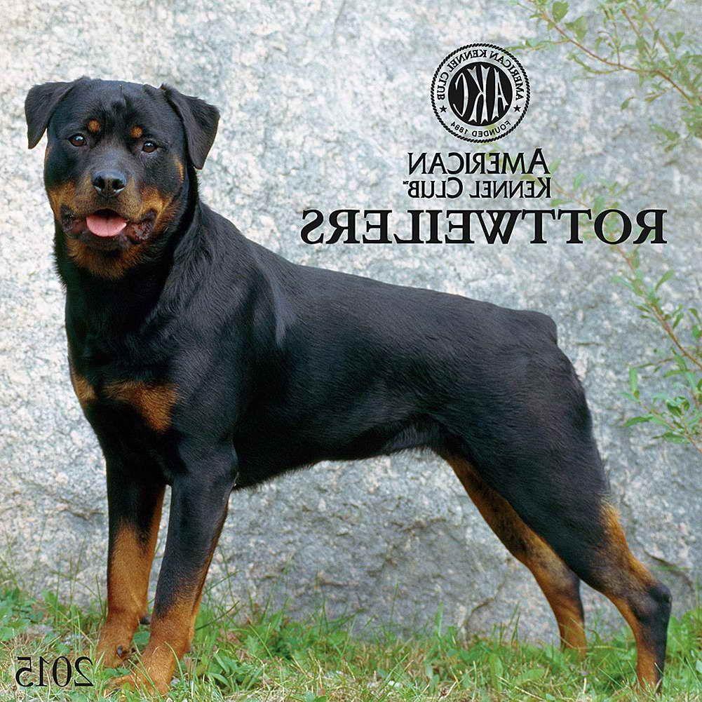 American Kennel Club Rottweiler American Kennel Club Rottweiler
