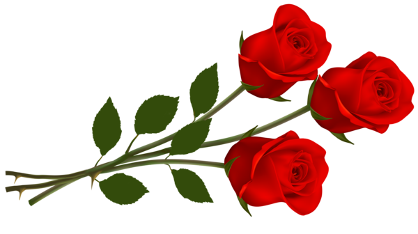 Large Red Roses Png Clipart Red Roses Rose Clipart Single Red Rose