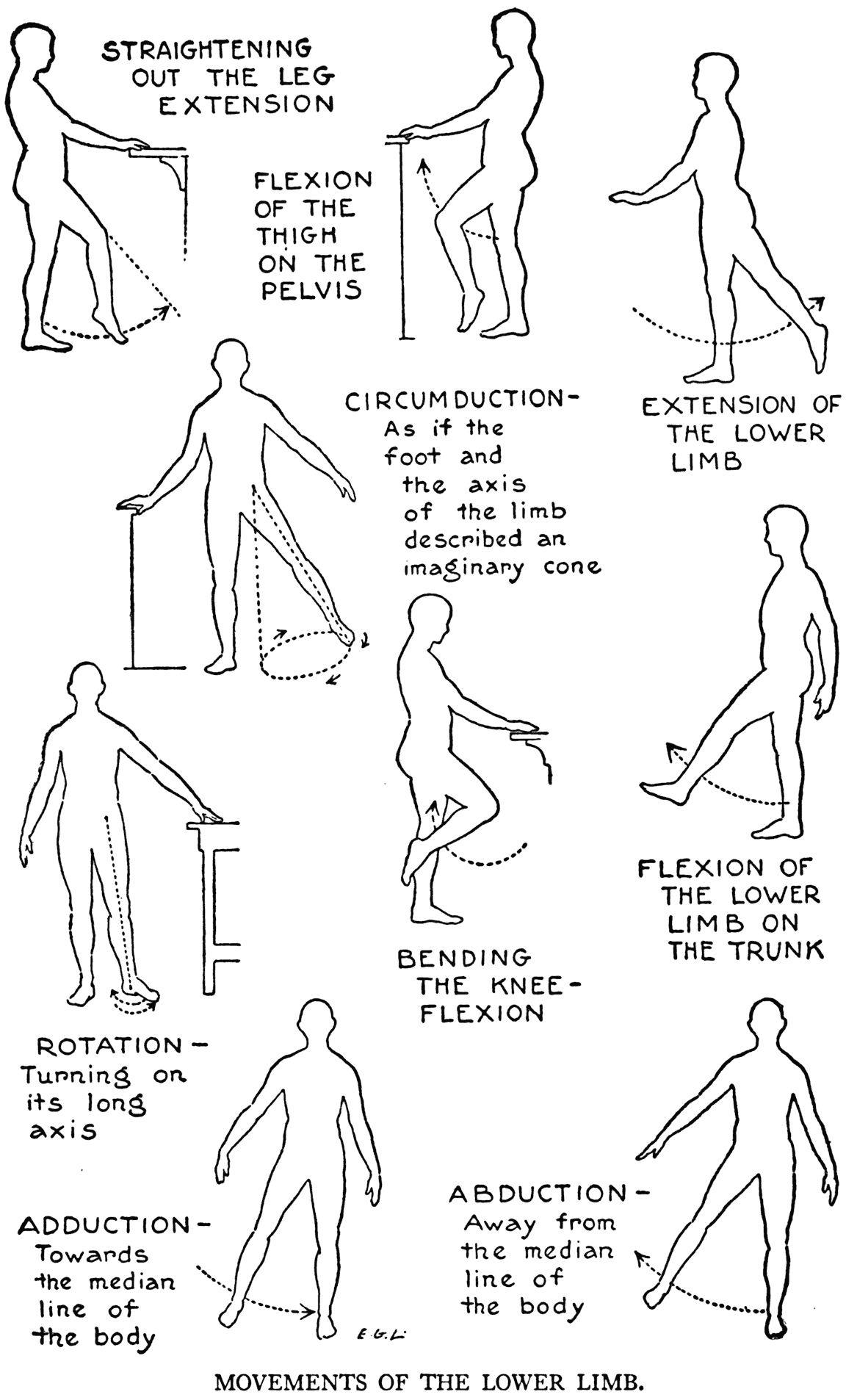 Rang of Motion Lower Extremities | Super Nurse | Pinterest
