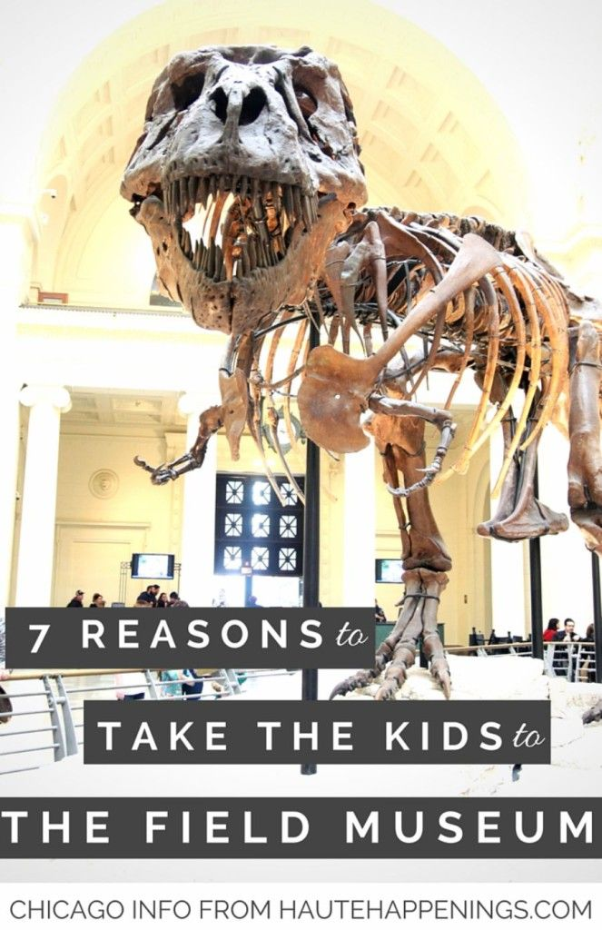 7 reasons to check out the field museum in chicago how to visit rh pinterest com