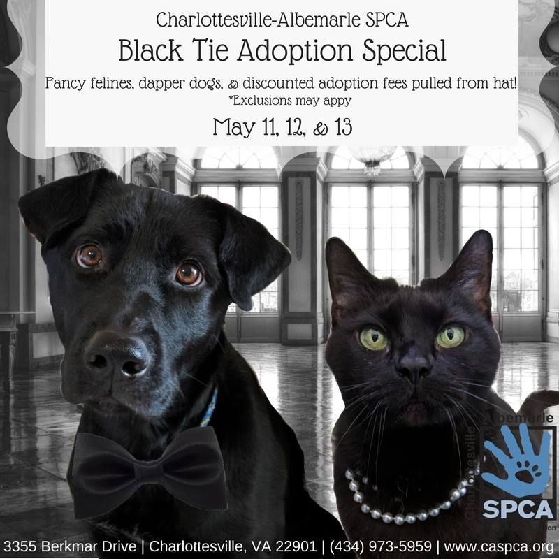 Great Black Dog Cat Adoption Promo By The Charlottesville