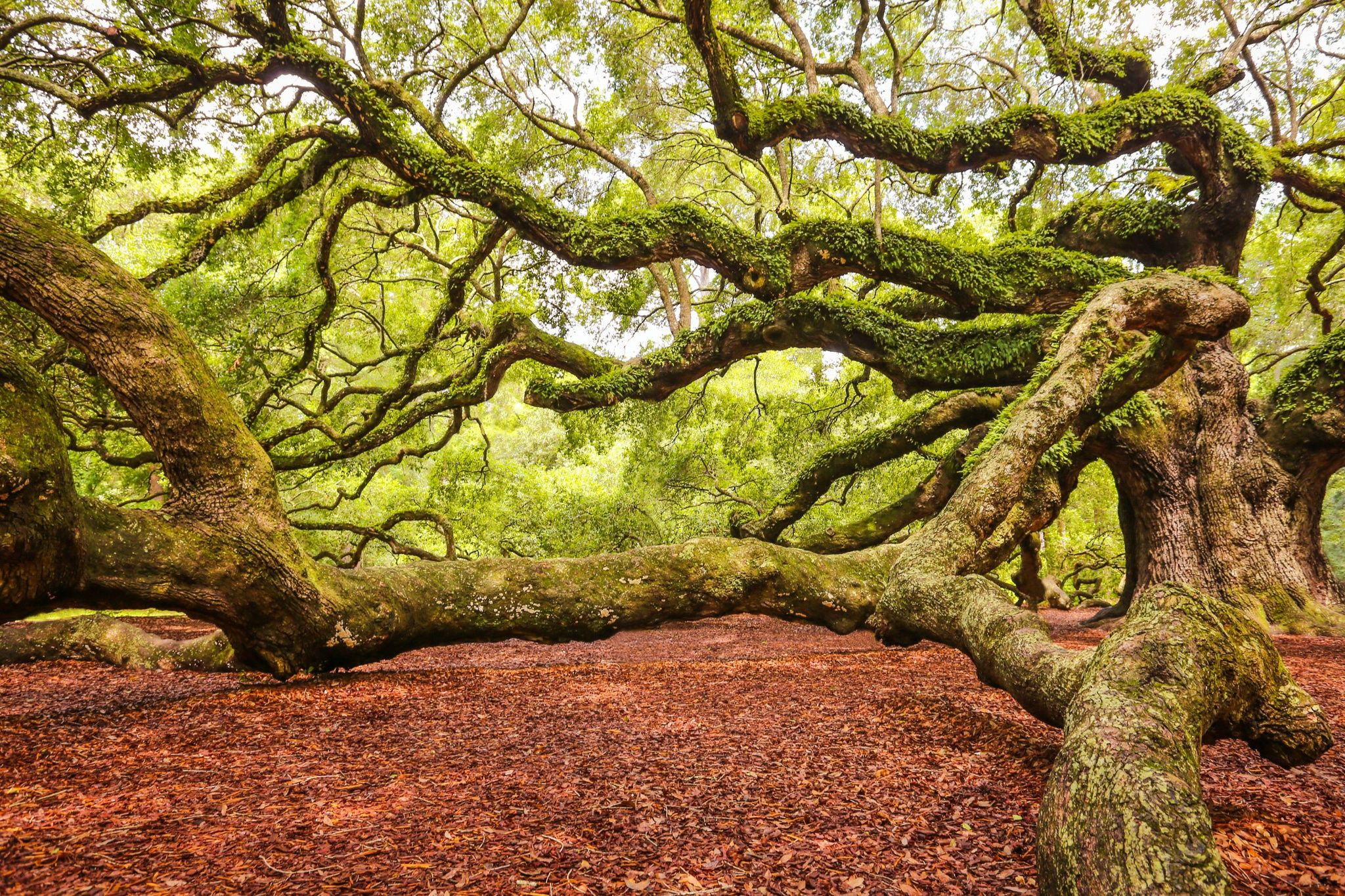 Branching out by Daniela Duncan on 500px