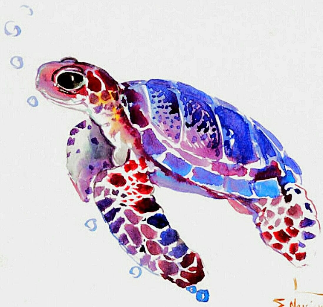 Watercolor Sea Turtle Animals Watercolor Sea Turtle