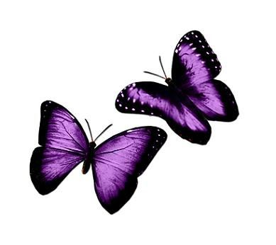 Purple Butterfly Tattoos Google Search With Images