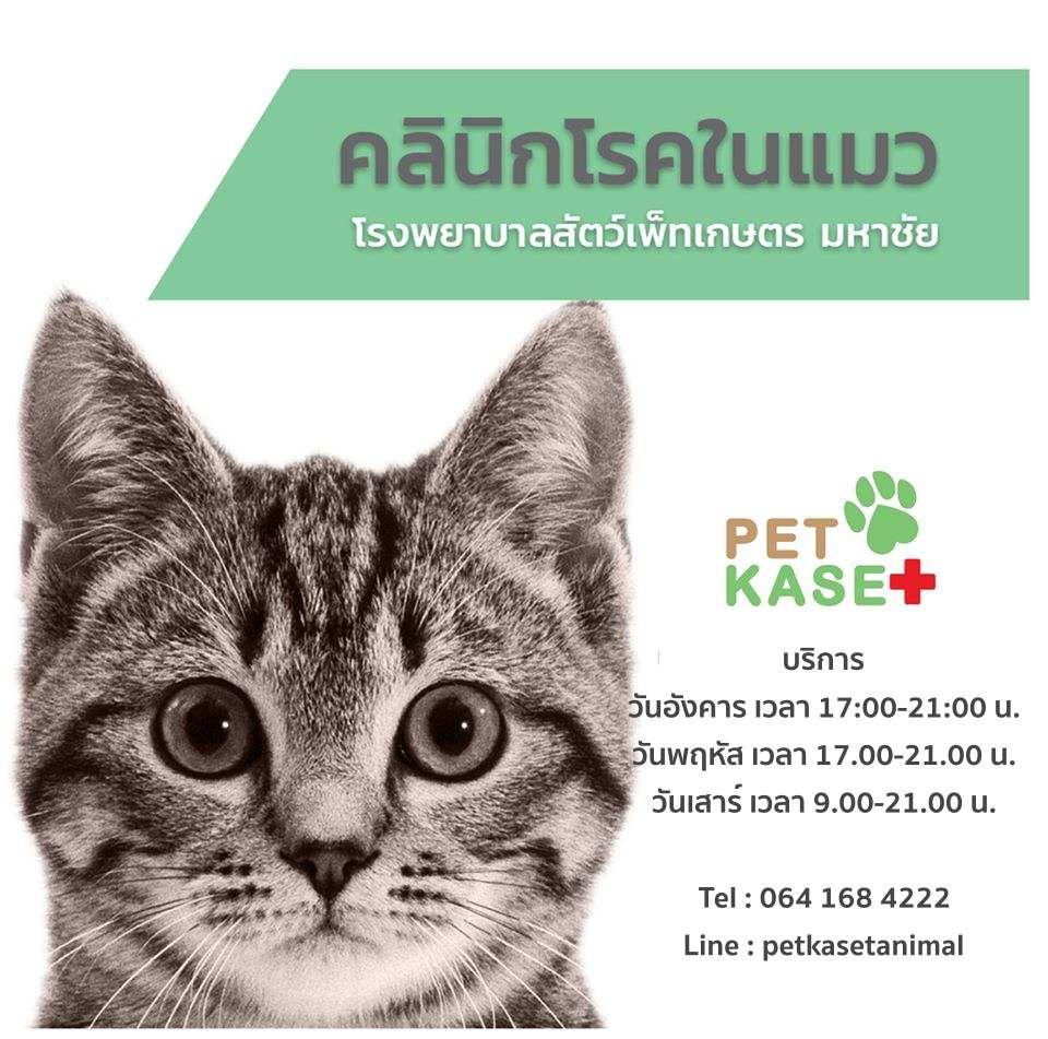 คล น กโรคในแมว บร การ ว นอ งคาร เวลา 17 00 21 00 น ว นพฤห ส เวลา 17 00 21 00 น ว นเสาร เวลา 9 00 21 00 น Tel 064 168 4222 Line Petkasetanimal โรงพยาบาลส