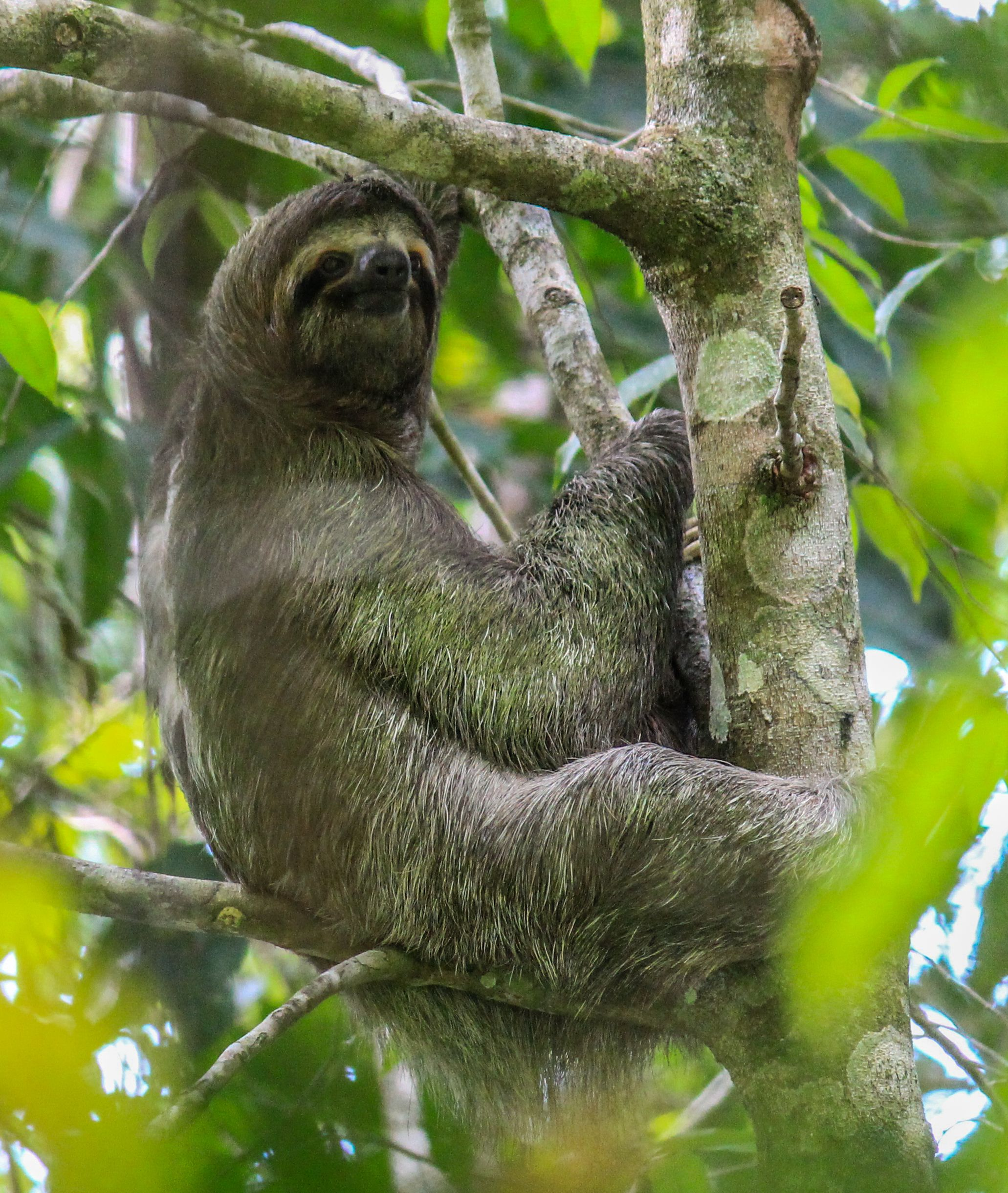 Pin By Mytanfeet Costa Rica Travel Blog On Costa Rica Wildlife