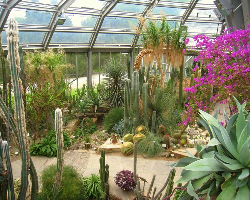 Cactus House, Berlin Botanical Gardens