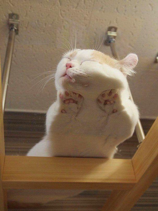 Kedilerin Profesyonel Uykucu Olduğunu Kanıtlayan 22 Mıncırılası Derecede Tatlı Kedi #funnyanimalpics