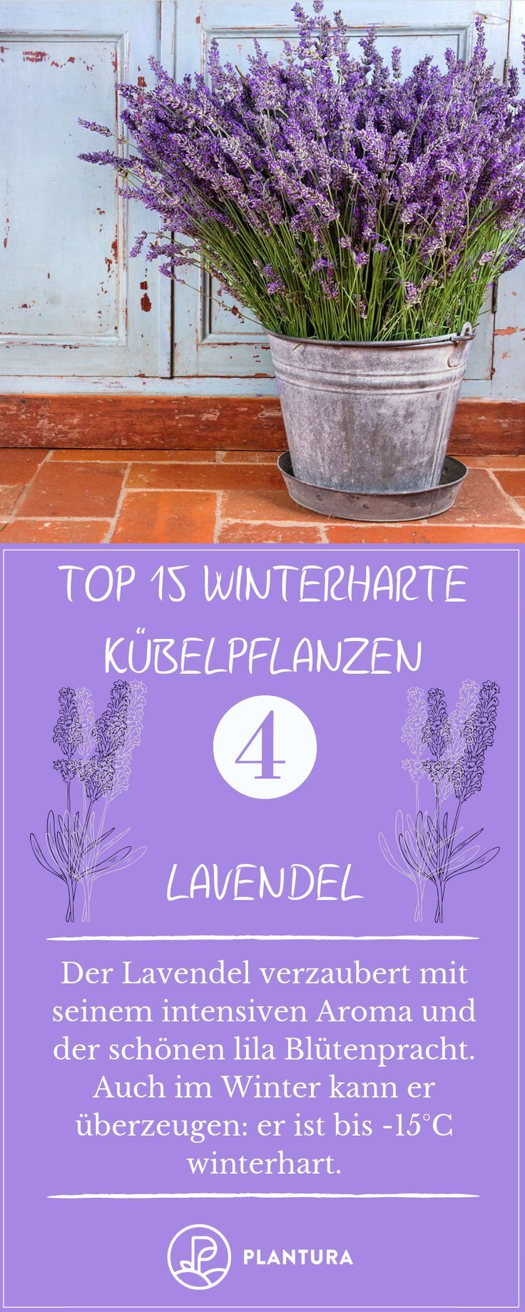 Winterharte Kübelpflanzen: Unsere Top 15 – #Kübelpflanzen #paletten #Top #Unse…