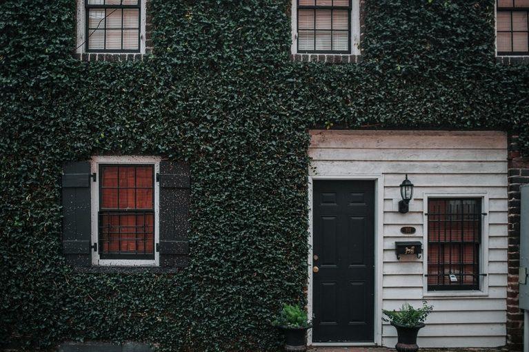 Photo by Seth Doyle Unsplash Eco friendly house, Green