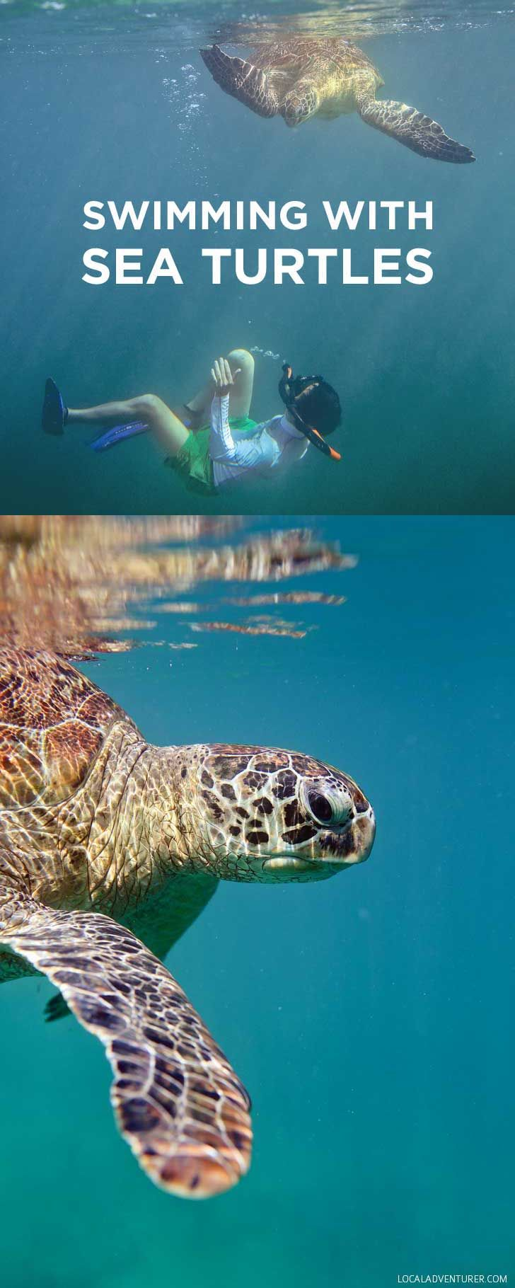Swimming with Dozens of Endangered Sea Turtles in
