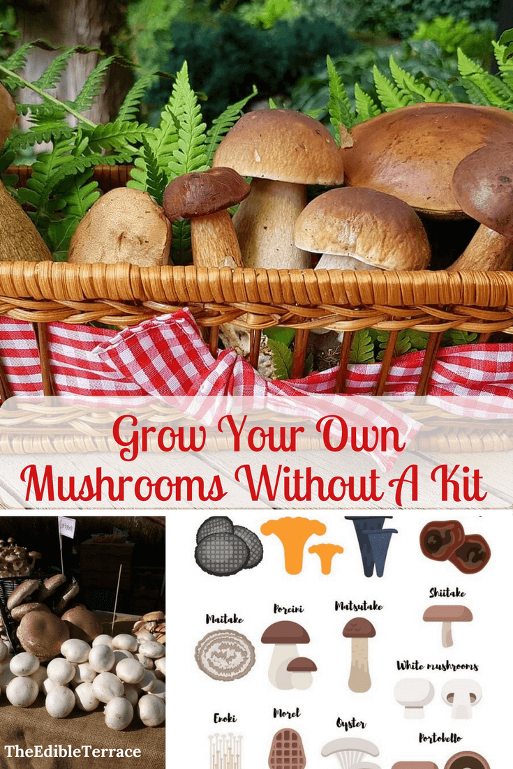 Photo of Would You Like To Grow Your Own Mushrooms Without A Kit?
